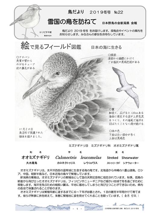 鳥だより22号(オオミズナギドリ)