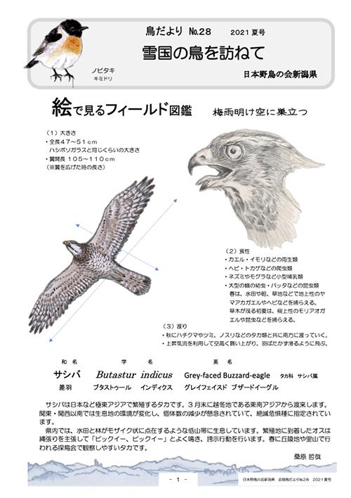 鳥だより28号(サシバ)
